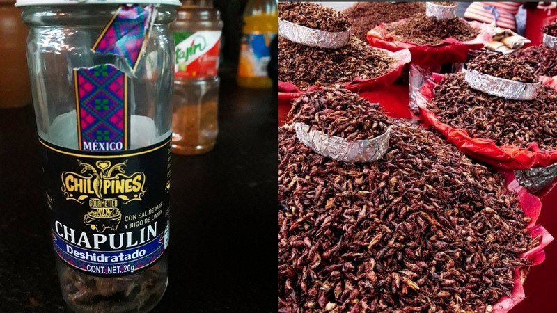 Fried Grasshoppers or Chapulins