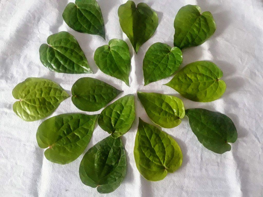 Betel Leaves for Betel Leaves or Paan Fritters  Tamalapaku Pakoda Recipe
