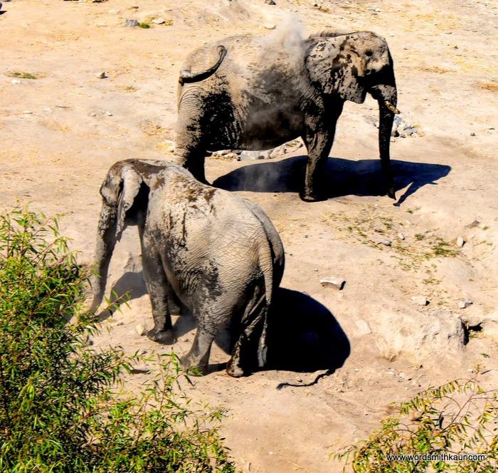 Zoologico Guadalajara  Elephants