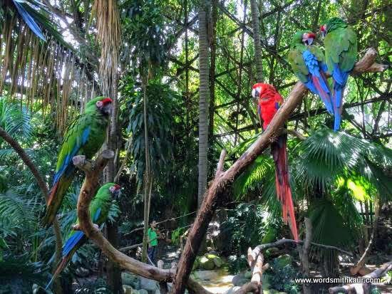 Macaws  Zoologico Guadalajara