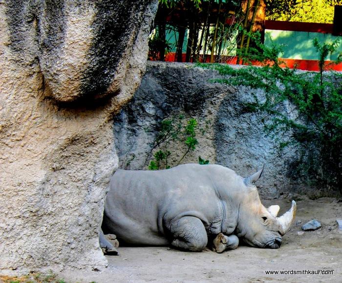 Hippo  Zoologico Guadalajara